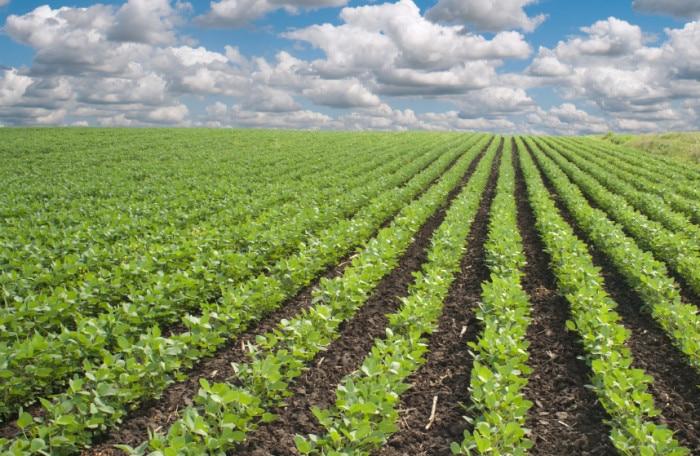 Soybean Fields | BoulderLocavore.com