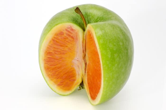 GMO Apple containing an orange