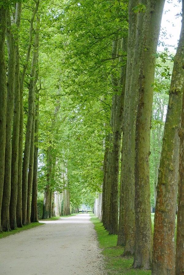 Woods - Jardin du Versailles - BoulderLocavore.com