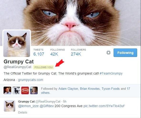 Grumpy Cat on Twitter BoulderLocavore.com