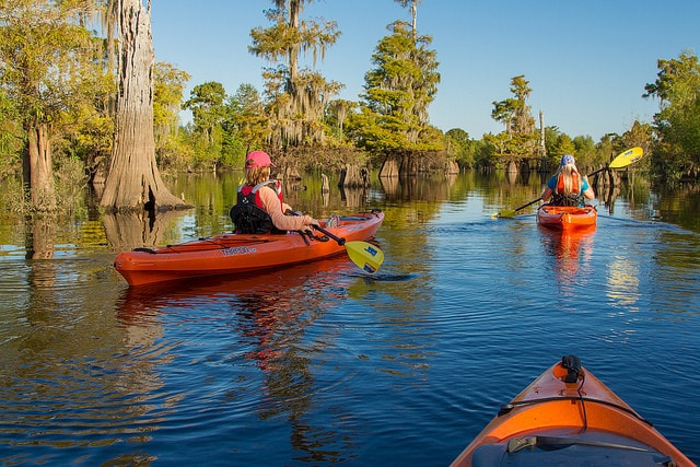 Kayaking at Dead Lakes, Gulf County Florida