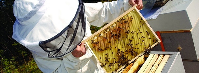 Harvesting Tupelo Honey - Gulf County Florida