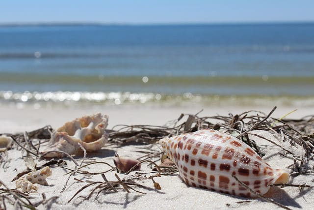 Shelling - Gulf County Florida