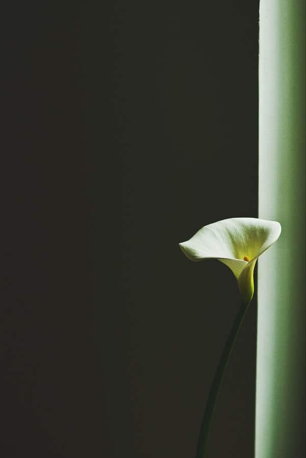 Single Lily by Marta Pawlik via Unsplash Stock Photography - BoulderLocavore.com