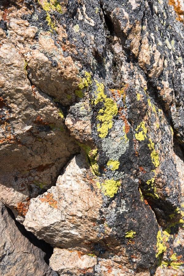Lichen Trail Ridge Road - Rocky Mtn Natl Park - BoulderLocavore.com