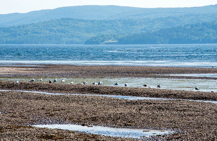 Gulls, Cabot Trail, Cape Breton Canada - BoulderLocavore.com