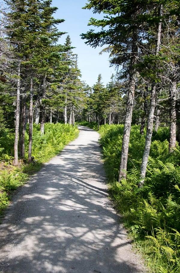Skyline Trail hike, Cape Breton Canada - BoulderLocavore.com