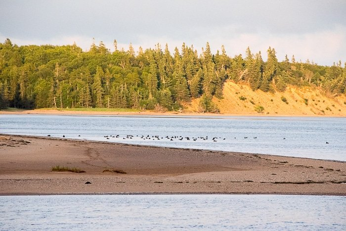 Bay of Fundy, Mary's Point Bird Reserve - BoulderLocavore.com