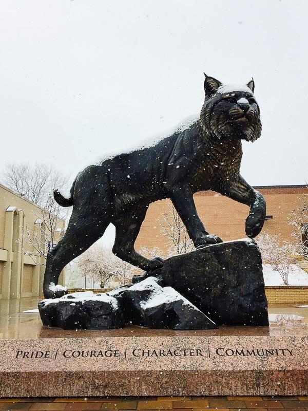 Wildcat Johnson and Wales University Denver CO BoulderLocavore.com