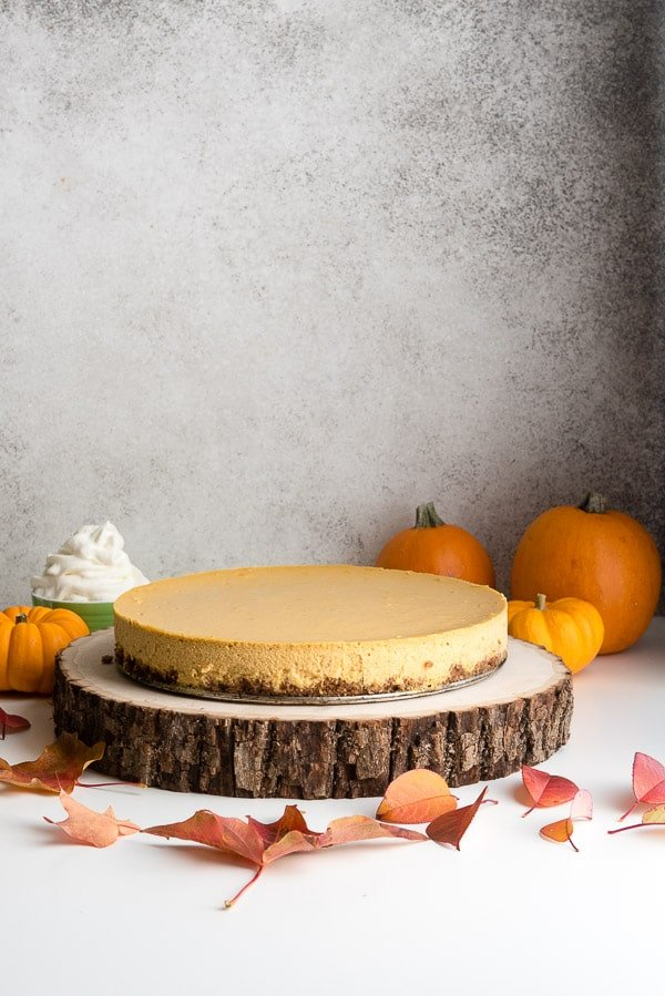 Easy recipe Pumpkin Cheesecake on wood bark cake plate with mini pumpkins and fall leaves BoulderLocavore.com