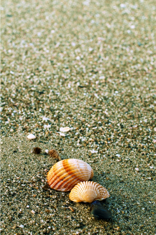 small orange seashells on wet sand